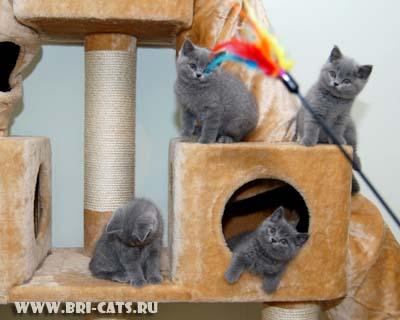 Своими руками домик для британской кошки