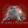 Сайт ::В гостях у Президента:: - питомники британских кошек
